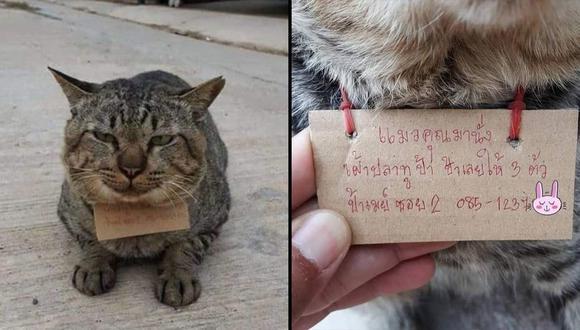 Gato regresa a casa 'endeudado'.