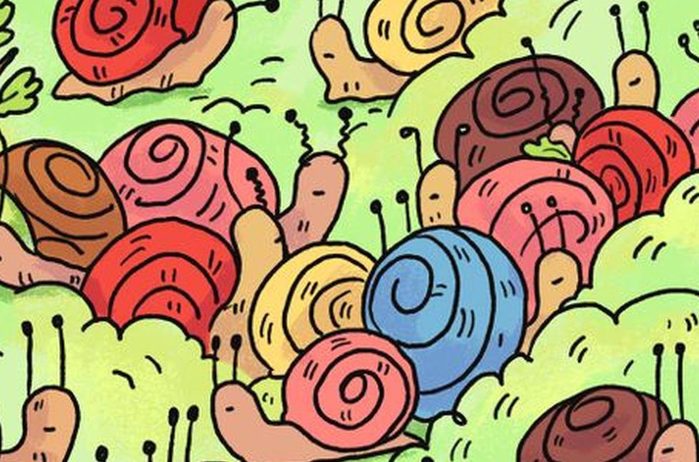 Halla la rosa escondida en el reto viral de los caracoles que es tendencia en Internet (Foto: Facebook)
