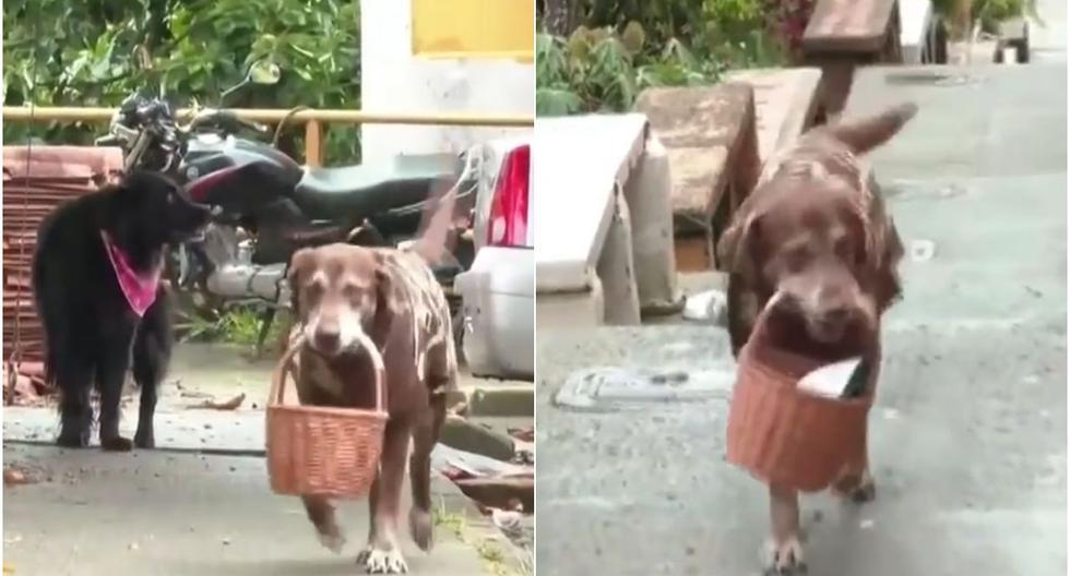 Eros se ha vuelto toda una popularidad en el barrio Robles en Medellín. (Captura/Facebook)