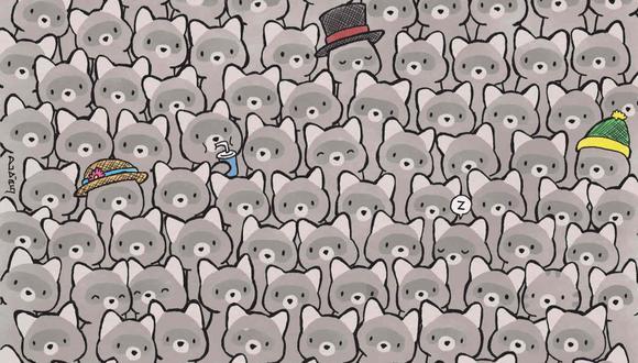 Tu misión, si decides aceptarla, es hallar al gato entre los mapaches en la imagen. (Foto: dudolf.com)