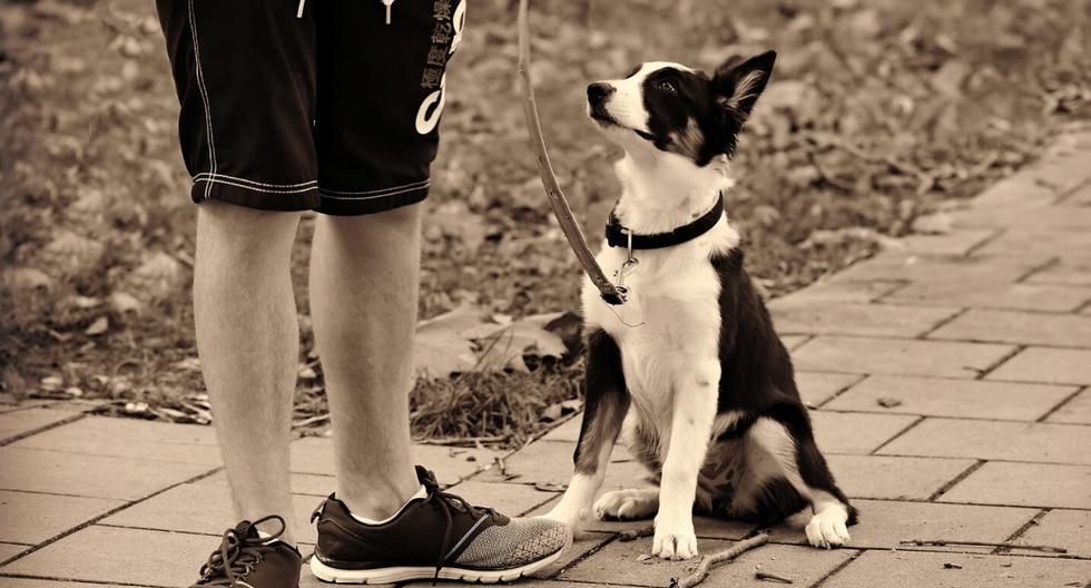 Una mujer descubrió la inaudita relación entre su cónyuge y su perro al revisar una cámara que escondió en casa. (Foto: Pixabay/Referencial)