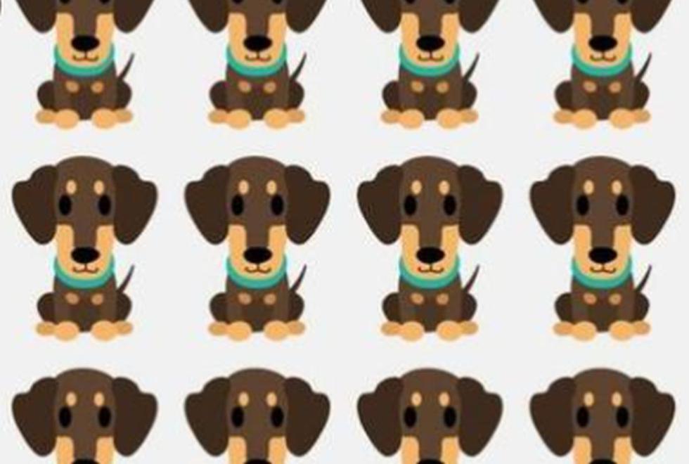Halla al perro distinto al resto en este viral que es tendencia en redes sociales (Foto: Facebook)