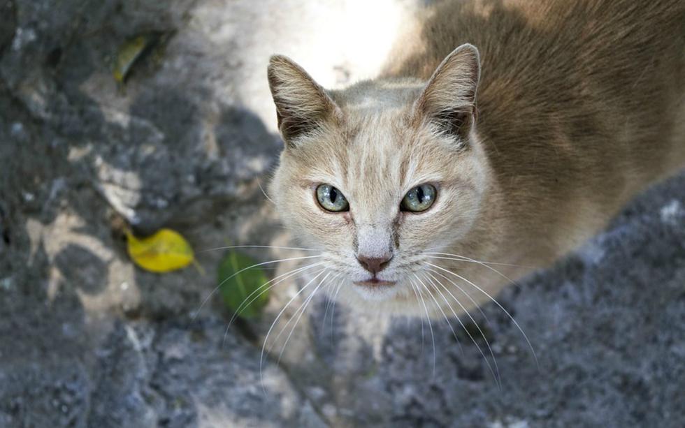 FOTO 2 DE 3 | Un gran susto fue el que se llevó una pareja del Reino Unido luego de que Galdalf, su gato, volviera a casa trayendo una preocupante amenaza que fue enviada a través de un mensaje escrito a mano. | Foto: Referencial/Pixabay (Desliza a la izquierda para ver más fotos)