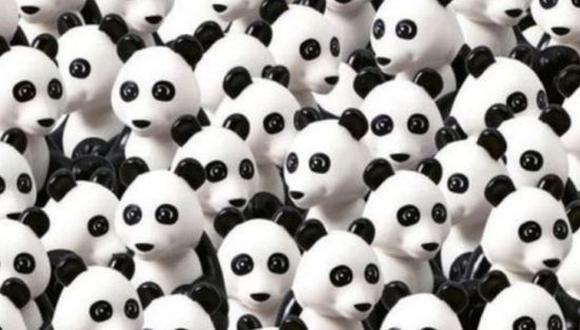 Reto solo para 'cracks': ¿Eres capaz de hallar al perro oculto entre los pandas de la imagen? (Foto: Pinterest)