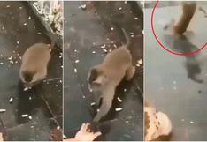 Caída que es viral: mono recibió comida de turistas y su escape fue totalmente accidentado [VIDEO]